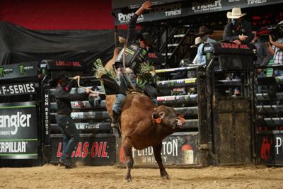 bull riding photo 1