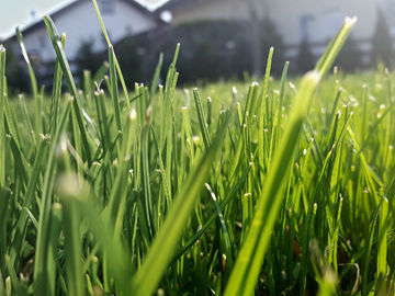 Scott Hollifield: Mowing grass becomes an electrifying experience