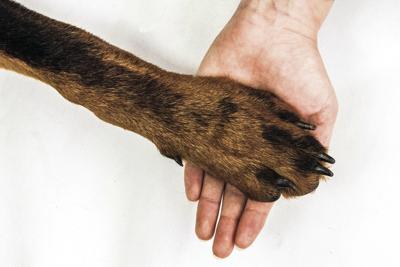 dog paw generic