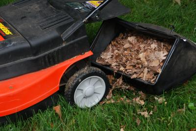 Put fall leaves to work in your landscape