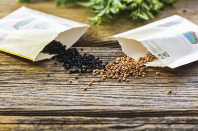 seeds generic pic