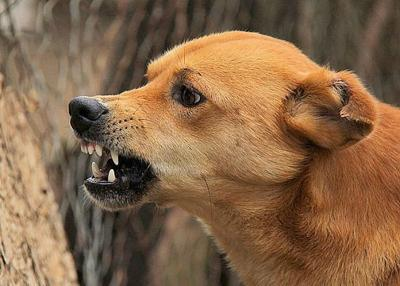 Angry Dog Aggressive Behavior