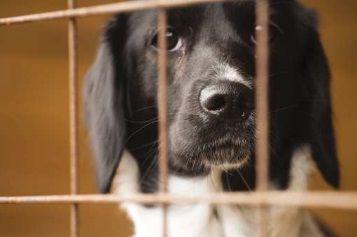 Shelter dog generic pic