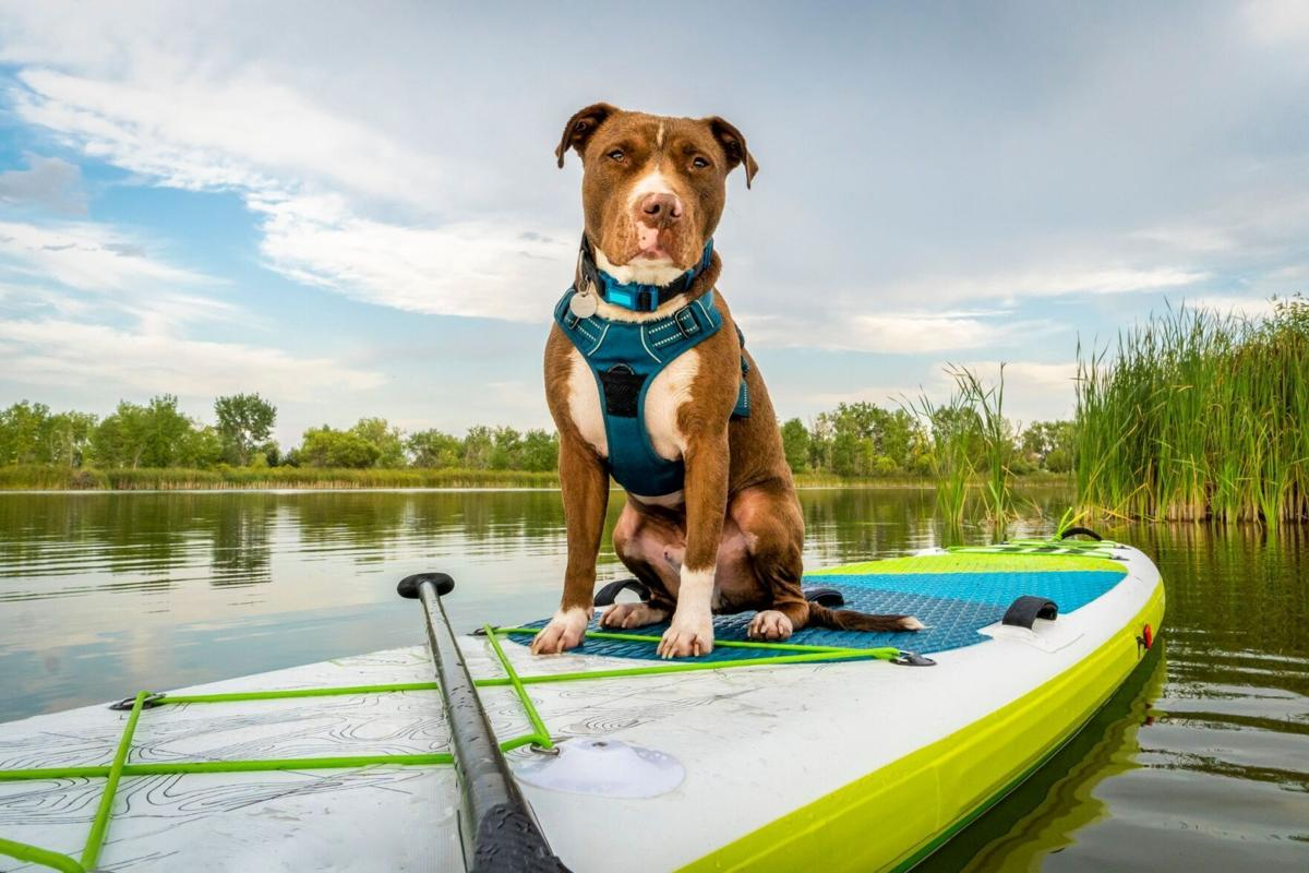 Great Social Media Groups for Adventurers and their Pets! (image)