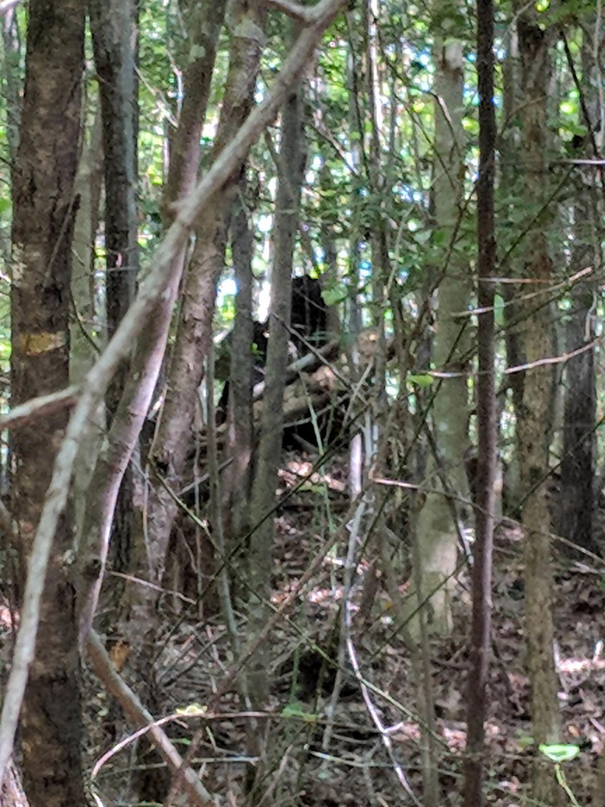 Teague Bigfoot 1.jpg