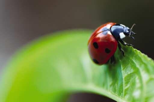 Lady bug generic photo