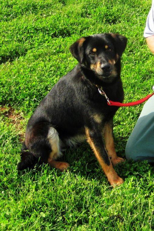 New Leash On Life Program Trains Dogs Provides Inmates With Skills News Morganton Com