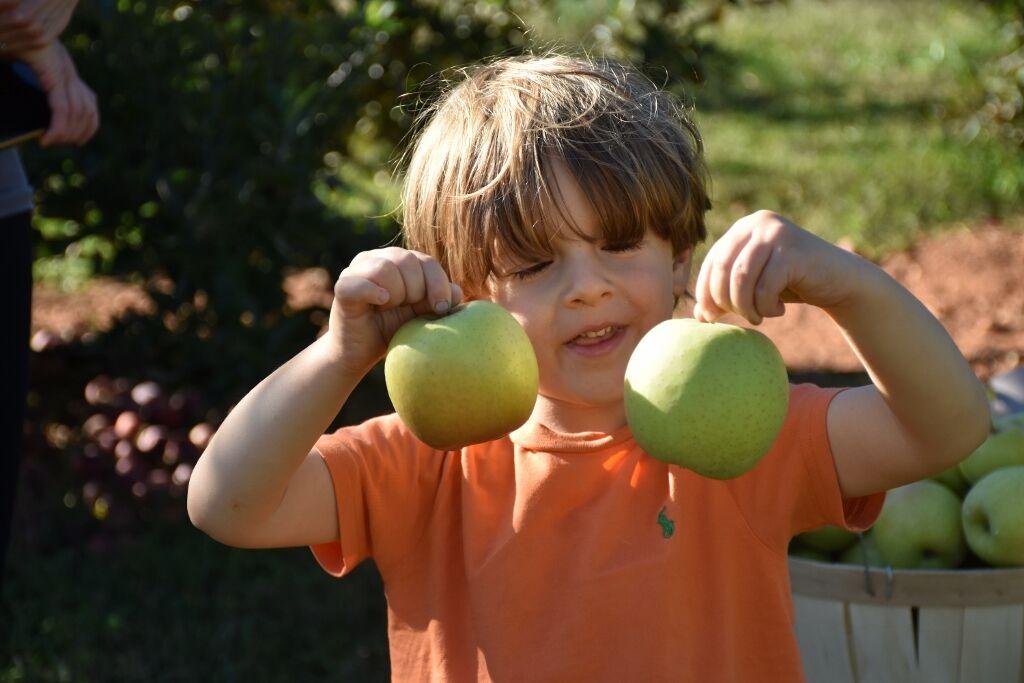 apple orchard10-2-20 025 (1024x683).jpg
