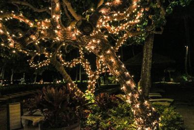 Outdoor Christmas tree generic