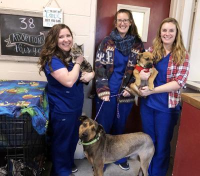 Animal shelter new hires