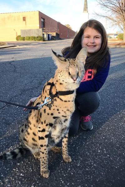 Student Meets Exotic Animal For School Project News Morgantoncom