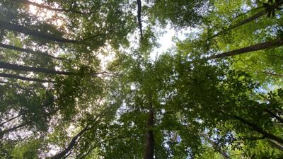 mnh_stock_trees.jpg