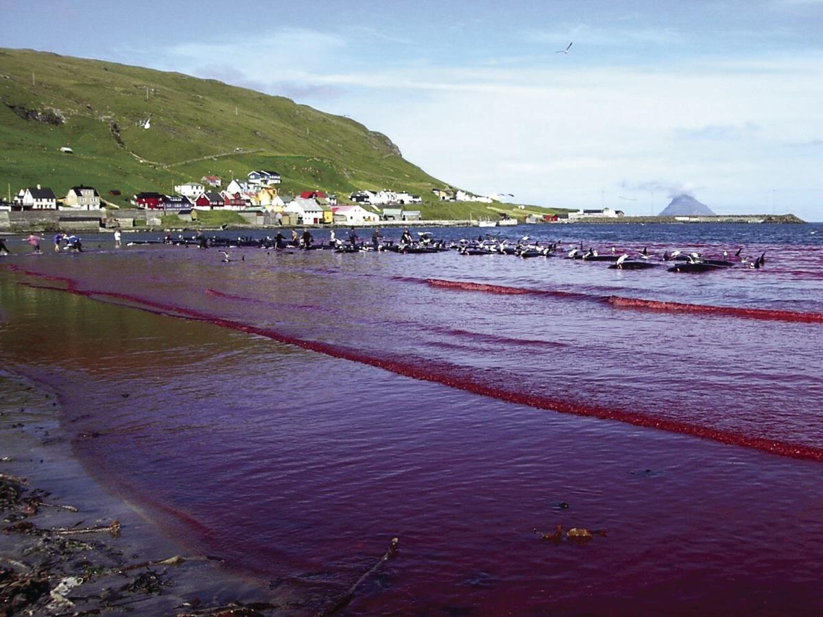 Faroe-Dolphin-CMYK-2.jpg