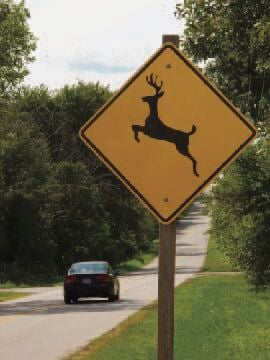 Watch for deer