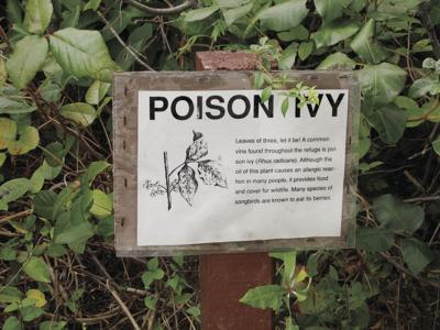 stock_poisonivy.jpg