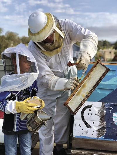 DONNA'S DAY: Learn about a bee-friendly life