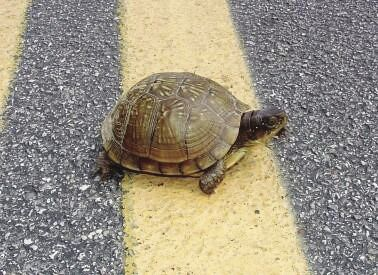 stock_turtleonroadway