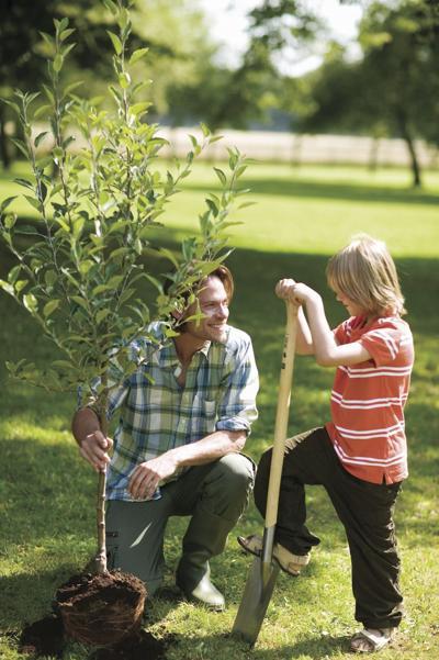 stock_fathersonplanttree