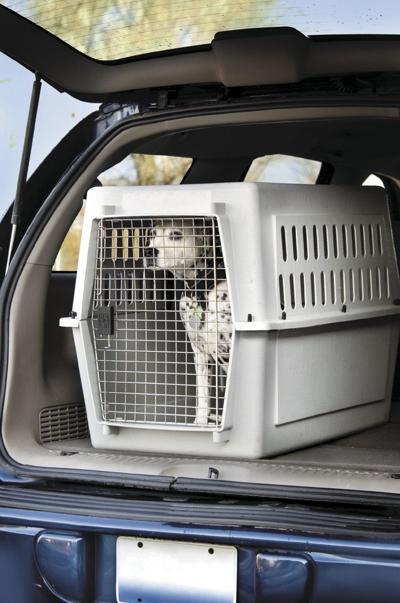 Preparedness plans should include pets