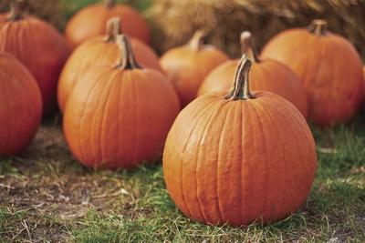 KITCHEN DIVA: Learn some tips for how to pick pumpkins