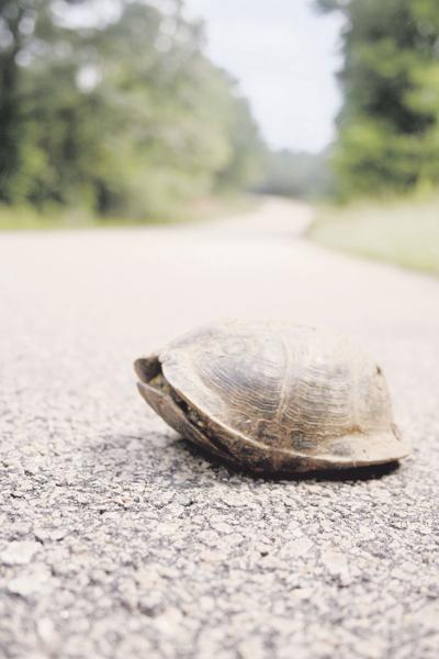 stock_turtleonroad