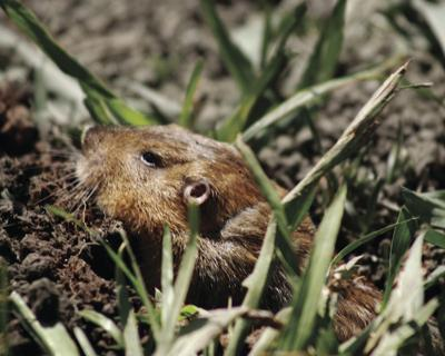stock_groundhog.jpg