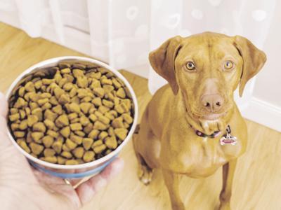 Liberty Meals on Wheels benefits pets