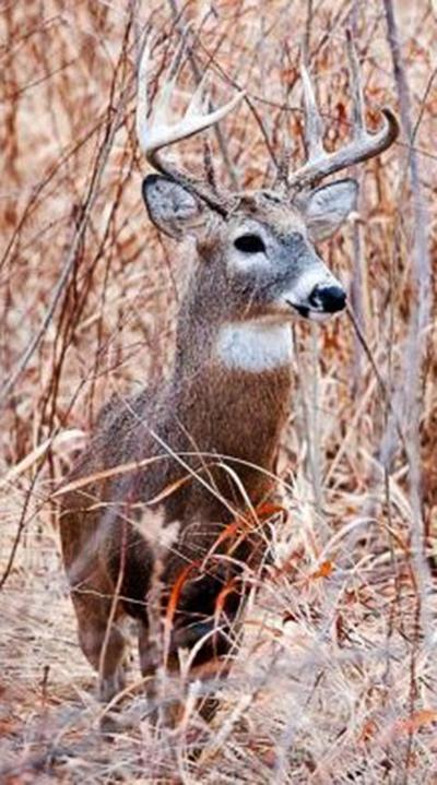 MDC reduces CWD Management Zone