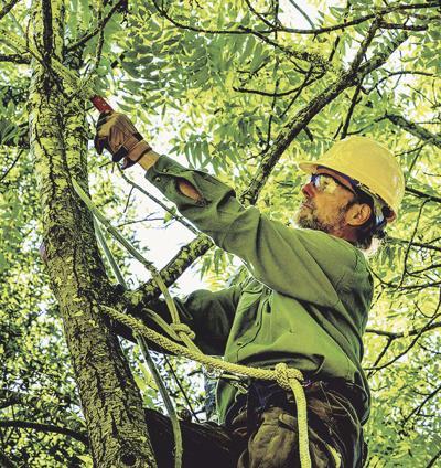 Heartland Tree Alliance offers tree pruning workshop