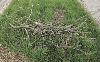 stock_treelimbs1