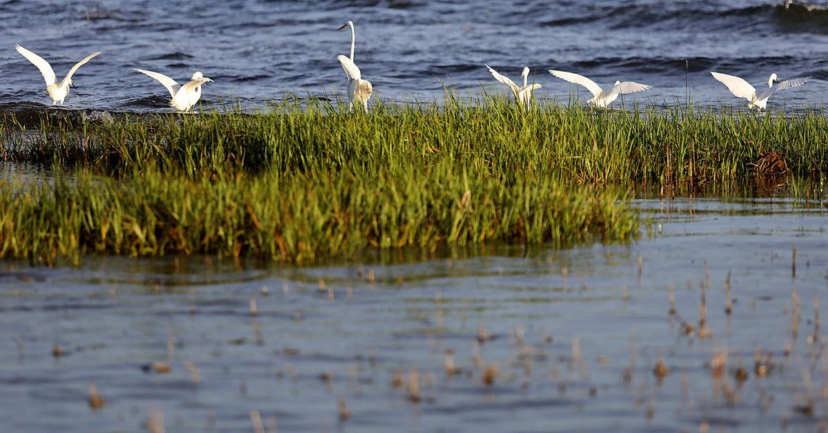 Waties Island birds in marsh