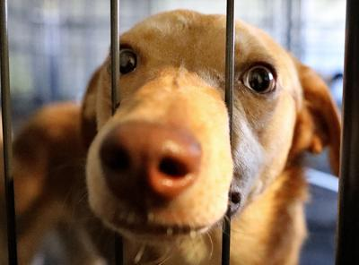 The Horry County Animal Care Center has been operating as a 'no-kill' shelter. But overcrowding threatens that