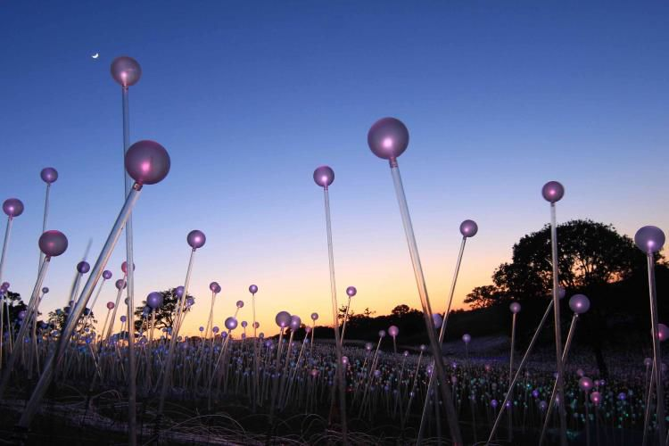 Brookgreen Gardens open for exercise, Bruce Munro exhibit now on display