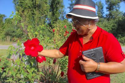Barbara Dixon Johnson garden