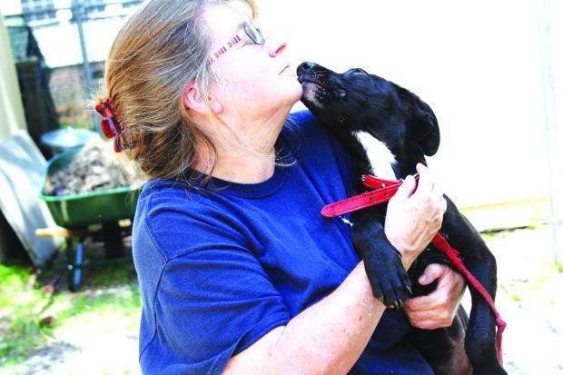 Myrtle Beach Humane Society Jobs