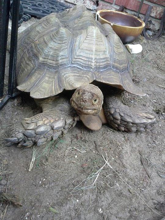 Myrtle Beach Woman Reunited With Pet Tortoise Myrtle