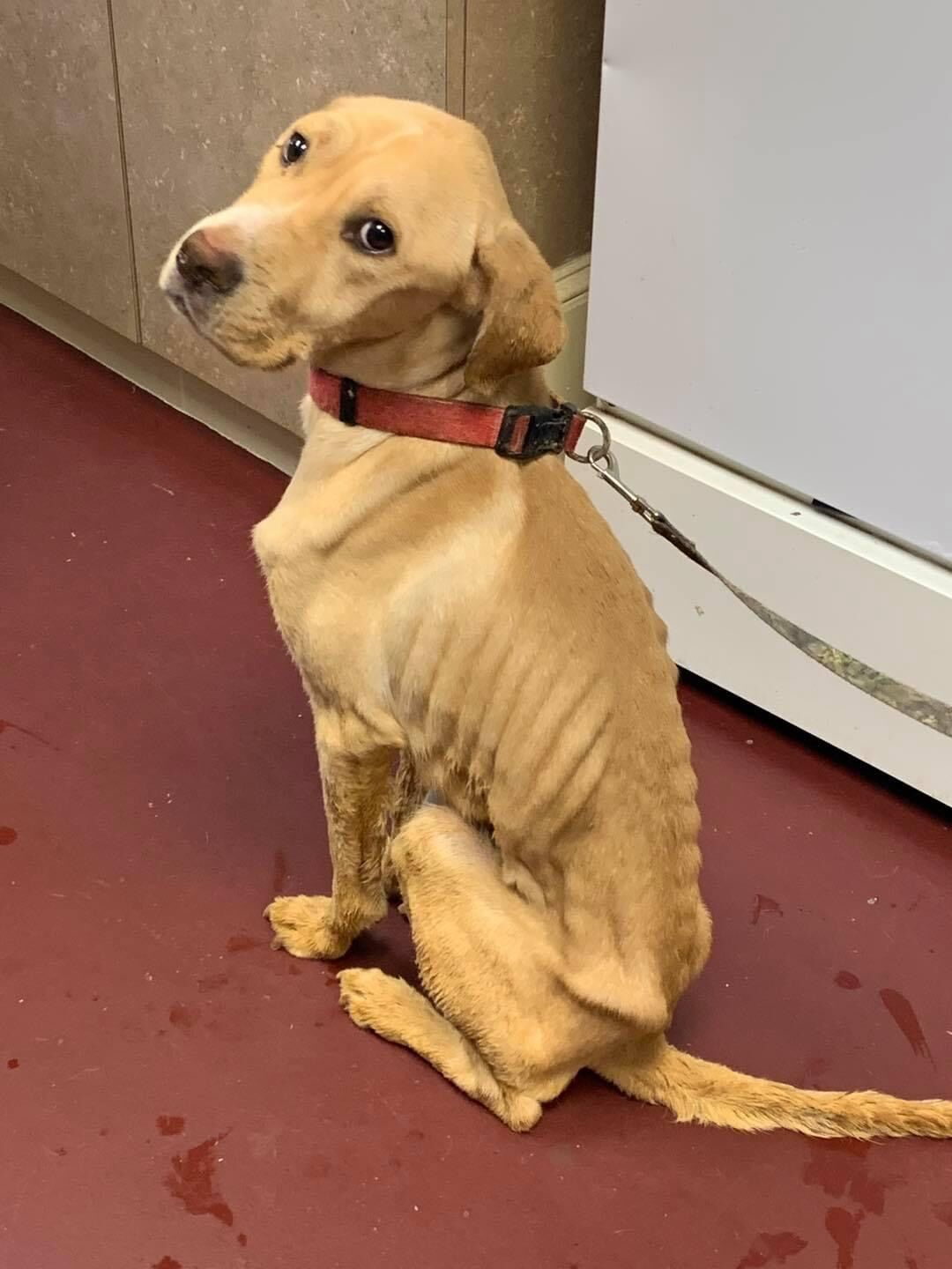 Investigation underway after severely malnourished dog dropped off at local shelter