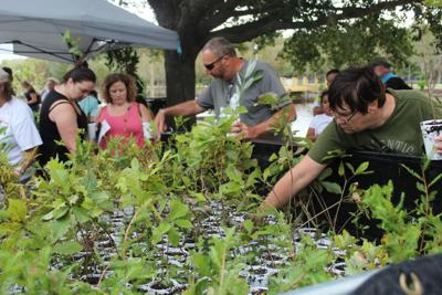 Citizens pick out free trees