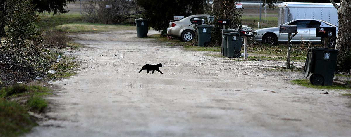 Trailer Park Cat