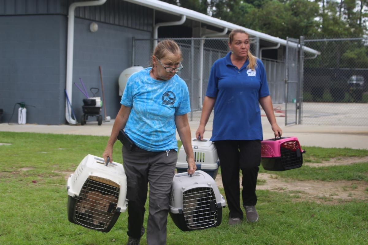 Local animal shelters preparing for Dorian