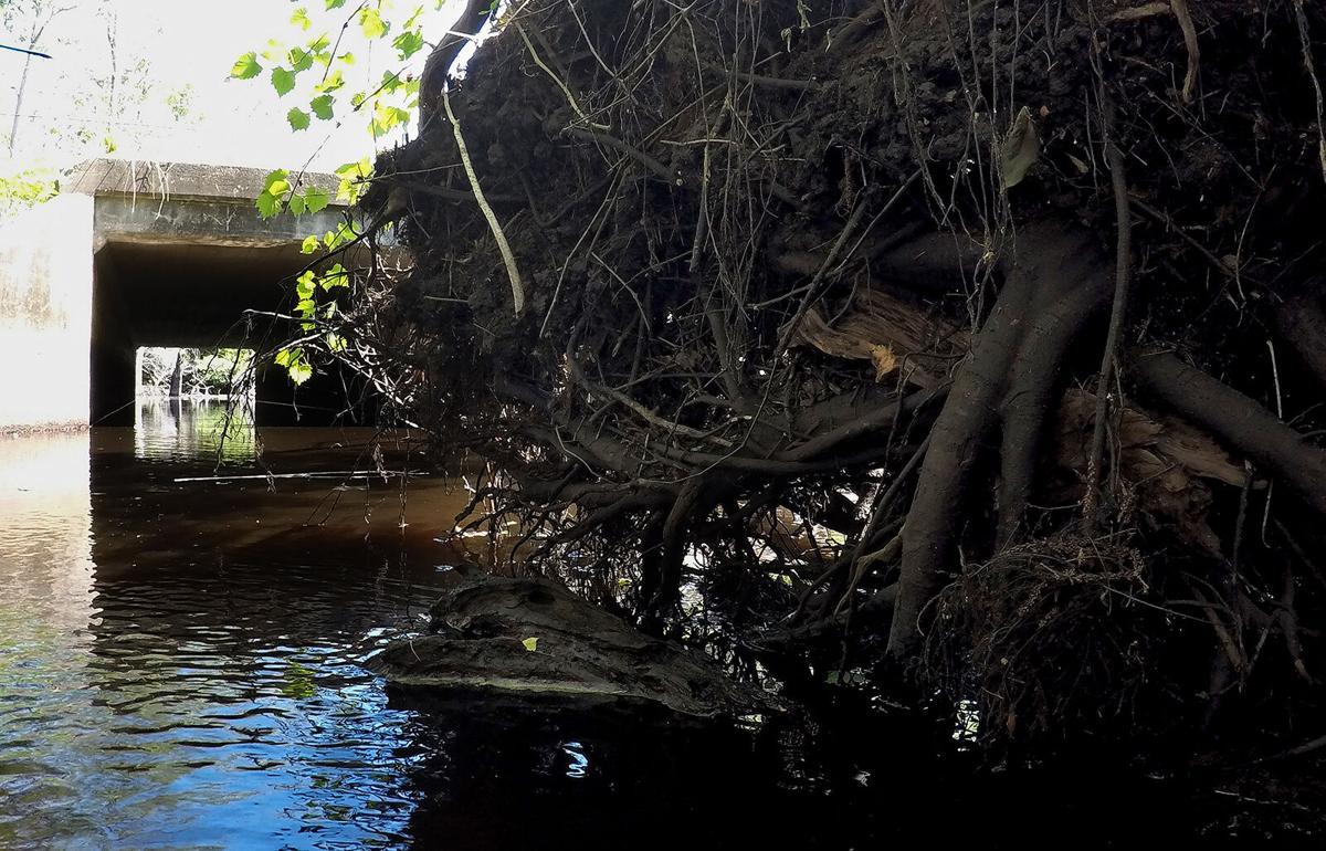 507 beaver dam_JM02.JPG