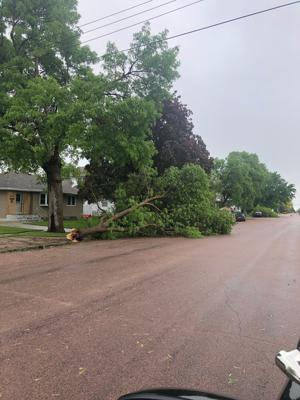 Large branches down