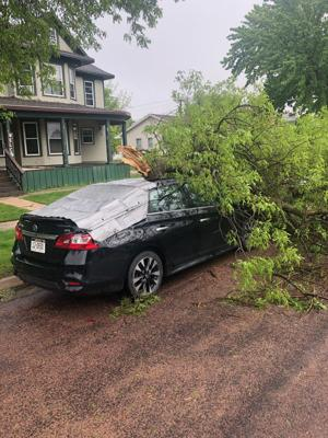 Tree branch damaged car