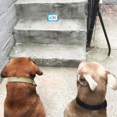 Niki Morales, formerly of Festus, sent in this photo taken outside her home in New York of her dogs, Daisy, left, and Duke, who appear to be learning some math.