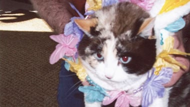 Sharon Willaims of rural Festus sent in this photo of her late cat, Candy.