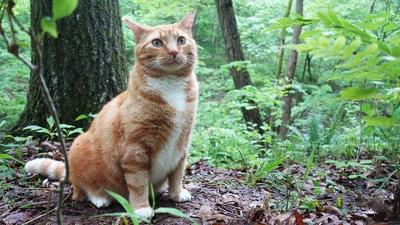This photo of Douglas Canady's cat, Nathan Jr., was taken in May 2020, when he was 7.