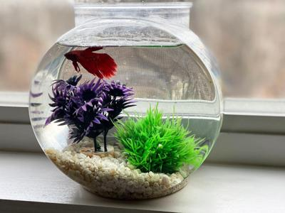 The Coleman family of Arnold sent in this photo of their pet fish, Harold.