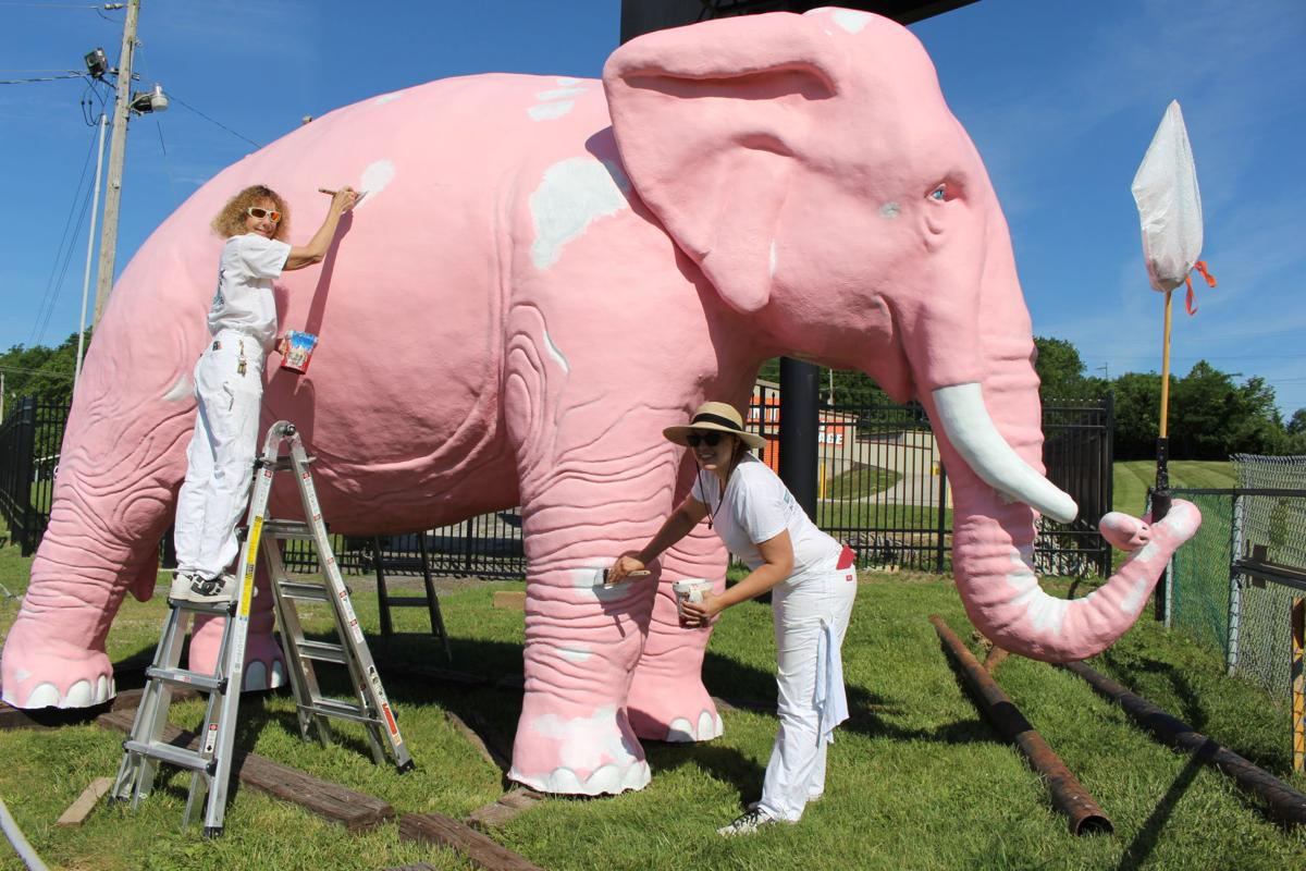 ICYMI: Fenton pachyderm is in the pink(er) | Local News ...