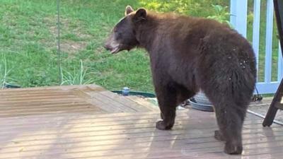 fenton bear 5-4-21