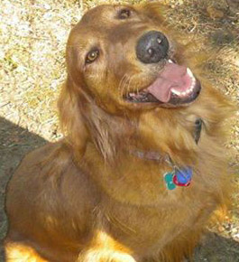 St  Louis couple seeks dog lost after Jefferson County traffic